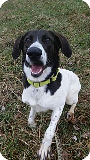 Hound (Unknown Type)/Collie Mix Dog for adoption in South Park, Pennsylvania - Trixie