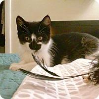 Adopt A Pet :: Zoey - Colmar, PA