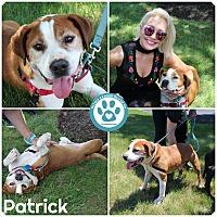 Adopt A Pet :: Patrick - Kimberton, PA