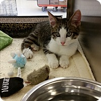 Adopt A Pet :: Pepe (in CT) - Manchester, CT