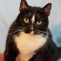 Adopt A Pet :: tux - Metairie, LA