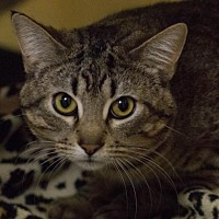 Adopt A Pet :: Terrance - Fargo, ND