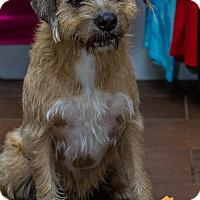 Adopt A Pet :: Ben - Evansville, IN