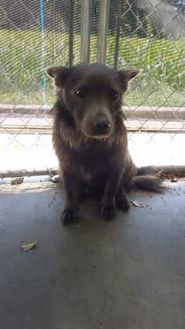 Terrier (Unknown Type, Small) Mix Dog for adoption in Kinston, North Carolina - Bandit