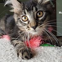 Adopt A Pet :: Marcie - Portland, OR