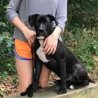 Adopt A Pet :: Sky - Ashland, VA
