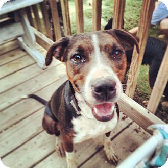 Plott Hound Mix Dog for adoption in Austin, Arkansas - Mia
