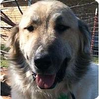 Adopt A Pet :: Joey   Adopted - Oklahoma City, OK