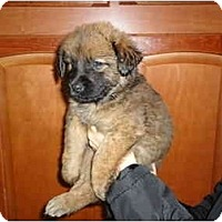 Adopt A Pet :: Chewy - Washington, NC