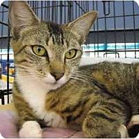 Adopt A Pet :: Cecline - Riverside, RI