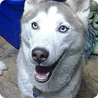 Adopt A Pet :: Diamond - Wadsworth, OH