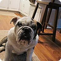 Adopt A Pet :: Hoss - Cibolo, TX