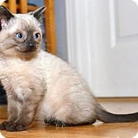 Adopt A Pet :: Jelly Beano - Davis, CA