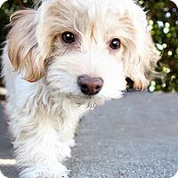 Adopt A Pet :: Cheesecake** Video** - Pasadena, CA