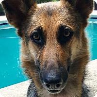 Adopt A Pet :: Meadow - Ormond Beach, FL