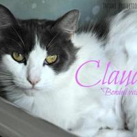 Adopt A Pet :: Claudia - Hamilton, ON