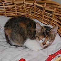 Adopt A Pet :: Addi - Brainardsville, NY