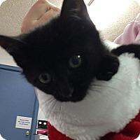 Adopt A Pet :: Pepper - Aiken, SC