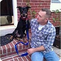 Adopt A Pet :: Bubs - Reisterstown, MD