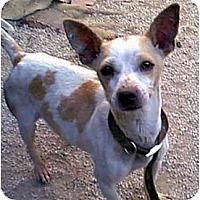Adopt A Pet :: Liza - dewey, AZ