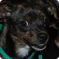 Adopt A Pet :: Pocahontas - Ogden, UT