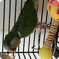 Adopt A Pet :: Ripley - Punta Gorda, FL