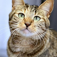 Adopt A Pet :: Raine - Mission Viejo, CA