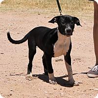 Adopt A Pet :: Susie - Marble Falls, TX