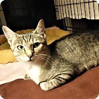 Adopt A Pet :: Lily - Riverside, RI