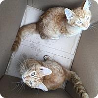Adopt A Pet :: Farley & Marley - Warren, OH