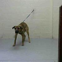 German Shepherd Dog Mix Dog for adoption in Conroe, Texas - ROKU