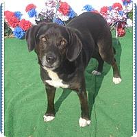 Adopt A Pet :: MAGIC - Marietta, GA