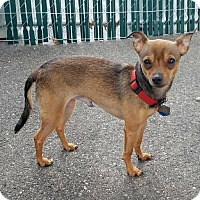 Adopt A Pet :: Grimmy - Freeport, NY