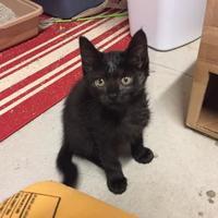 Adopt A Pet :: Rocket - Fort Collins, CO