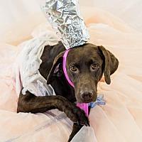 Adopt A Pet :: Glinda - Fayetteville, AR
