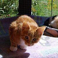 Adopt A Pet :: Brian - Brainardsville, NY