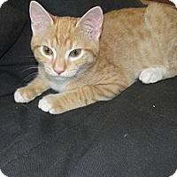 Adopt A Pet :: Fred - Jenkintown, PA