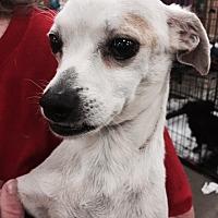 Adopt A Pet :: Paco - Fresno, CA