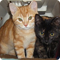 Adopt A Pet :: Sherri & Shelly - Kensington, MD