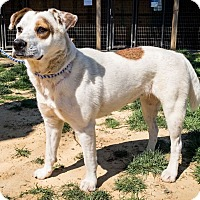 Adopt A Pet :: F-174 - Jasper, AL