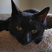 Adopt A Pet :: Joaniez - Philadelphia, PA