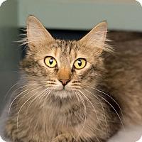 Adopt A Pet :: Momo - Fountain Hills, AZ