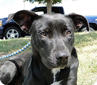 Labrador Retriever Mix Dog for adoption in Austin, Texas - Harper Lee