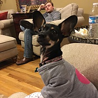 Adopt A Pet :: Tina - London, KY