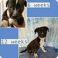 Adopt A Pet :: Gertie-pending adoption - East Hartford, CT