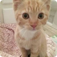 Adopt A Pet :: Goldi - North Highlands, CA