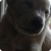 Adopt A Pet :: Nina - Palatine/Kildeer/Buffalo Grove, IL