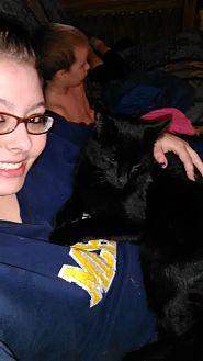 Domestic Mediumhair Cat for adoption in Westland, Michigan - freddy