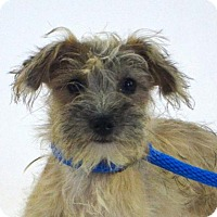 Adopt A Pet :: Little John - Goodyear, AZ