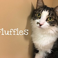 Adopt A Pet :: Fluffles, Roy, Cinnamon - Foothill Ranch, CA